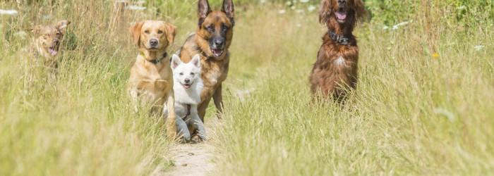 Dog Walking Prices